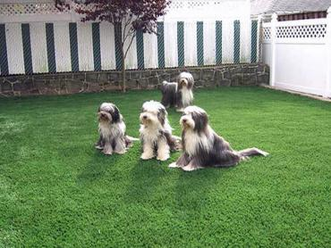 Artificial Grass Photos: Artificial Turf Cost Green Acres, California Pictures Of Dogs, Backyard Makeover