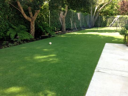 Artificial Grass Photos: Faux Grass Banning, California Pictures Of Dogs