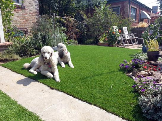 Artificial Grass Photos: Green Lawn La Quinta, California Cat Playground, Front Yard Landscaping