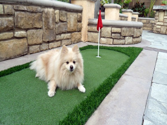 Artificial Grass Photos: Installing Artificial Grass Nuevo, California Artificial Turf For Dogs,  Dog Kennels
