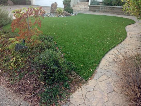 Artificial Grass Photos: Lawn Services Desert Hot Springs, California Cat Grass, Backyard Design