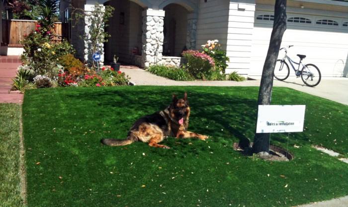 Pet Grass, Artificial Grass For Dogs in Corona